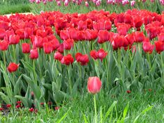 цветы-на-день-победы-1398779351_52.jpg / Облако Mail.Ru
