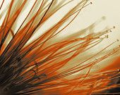 Items similar to Orange / black close up Flower print 07 - giclee - / inches on Etsy Tropical Flowers, New Shop, Flower Prints, Orange, Unique Jewelry, Etsy, Shopping, Vintage, Black