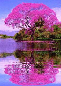 """Beautiful tree in Brazil🌳… "" Beautiful Nature Wallpaper, Beautiful Landscapes, Beautiful Gardens, Beautiful Images, Beautiful Flowers, Beautiful Scenery, Beautiful Nature Photography, Beautiful Paintings Of Nature, Beautiful Landscape Pictures"