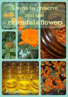 5 ways to preserve and use calendula