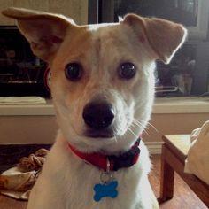Romey Dingo