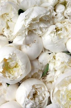 Gorgeous Snow White Peonies.