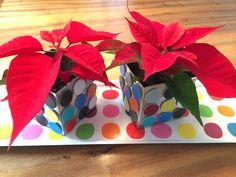 Poinsettias oder Weihnachtssterne