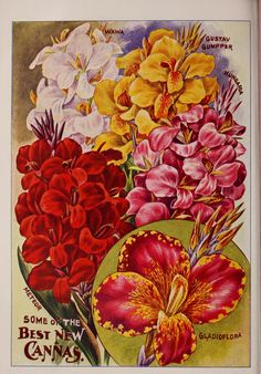 John Lewis Childs Seed Company Catalogue - rare flowers, vegetables & fruits - 1914