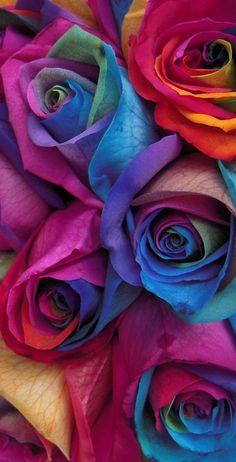 Nature Wallpaper: Gay Pride Rainbow Roses Themed Custom Cornhole Board Set with bags Purple Flowers Wallpaper, Flower Phone Wallpaper, Beautiful Flowers Wallpapers, Rainbow Wallpaper, Pretty Wallpapers, Wallpaper Iphone Cute, Colorful Wallpaper, Flower Wallpaper, Nature Wallpaper