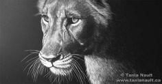 nalathegift_lion