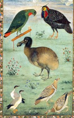 """1625 painting of the now-extinct dodo bird (among other birds) by Mughal Indian artist Ustad Mansur. This is the first color portrayal of a dodo and is thought to be """"one of the most accurate depictions of a live dodo. Mughal Paintings, Indian Paintings, Animal Paintings, Historia Natural, Indian Artist, Painting Gallery, Fauna, Bird Art, Asian Art"""