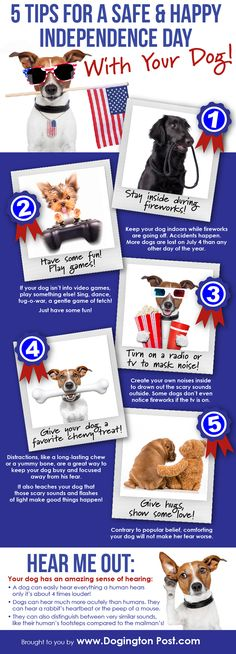How to keep your pets comfortable on the 4th of July!