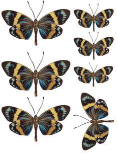 1338574388_55_FT838_sd_june_butterflies_3_copy.jpg 1,550×2,051 pixels