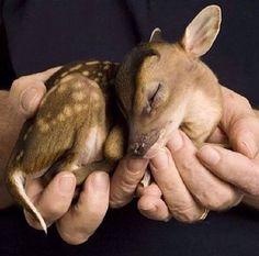 Hotels-live.com/cartes-virtuelles #MGWV #F4F #RT Baby Deer. Photo Credit: Jim Moore. Tag: #lifeonourplanet by lifeonourplanet https://www.instagram.com/p/BAlA_hEiSVg/