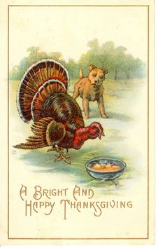 Dog, plate, A bright and happy Thanksgiving - high resolution image from old book. Thanksgiving Pictures, Thanksgiving Greetings, Vintage Thanksgiving, Thanksgiving Traditions, Vintage Holiday, Thanksgiving Turkey, Vintage Halloween Cards, Vintage Cards, Vintage Postcards