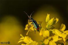 Macro de printemps. #limousin #corrèze #nature #printemps #fleur #insecte #macro