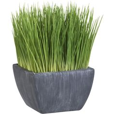 Crate & Barrel Potted Grass (£7.17) ❤ liked on Polyvore featuring home, home decor, floral decor, plants, fillers, flowers, decor, green, flower home decor and rustic pots