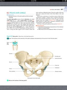 Principles of Anatomy and Physiology, Chapter 8, The Skeletal System: The Appendicular Skeleton, 13, book pg 267