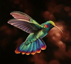 Colorful Hummingbird Flying Hummingbird have ten primary