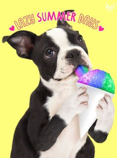 Shop Justice's new arrivals for girls' clothing in the latest styles! Boston Terrier Costume, Boston Terrier Dog, Animals And Pets, Funny Animals, Cute Animals, I Love Dogs, Puppy Love, Cute Puppies, Cute Dogs