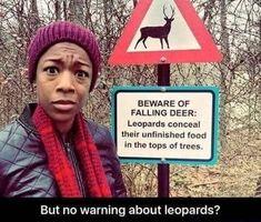 Funny Memes – [Beware Of Falling Deer…] Haha Funny, Funny Cute, Funny Memes, Funny Stuff, Funny Humour, Funniest Memes, Super Funny, Funny Laugh, Image Hilarante