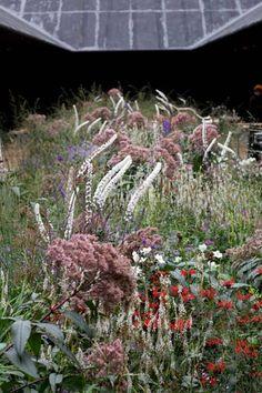 More Serpentine Gallery - Pier Oudolf Cottage Garden Plants, Lush Garden, Balcony Garden, Peter Zumthor, Courtyard Design, Garden Design, Landscape Architecture, Landscape Design, Grass Flower