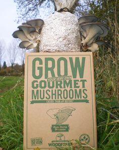 Grow Your Own Mushrooms | grow-your-own-mushrooms-kit-3.jpg