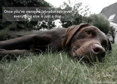 For the Love of Labs