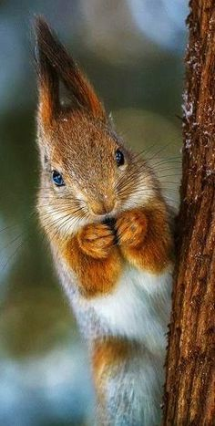"Red Squirrel - ""Yikes, there's a cat!"""