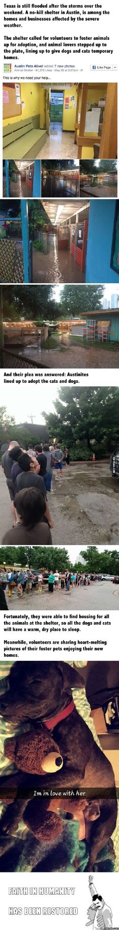 Texans line up to adopt cats and dogs after animal shelter is flooded and balloon emoji story