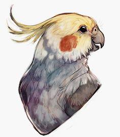 Commission for Animal/ bird illustration Cute Animal Drawings, Animal Sketches, Bird Drawings, Cute Drawings, Art Sketches, Bird Art, Art Tutorials, Cute Art, Art Inspo