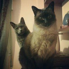 Coco & Mofly