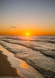 Coastal Photography by Alan Hoelzle 1rctSs6hponcsoraed · Winter sunrise with my bird friend