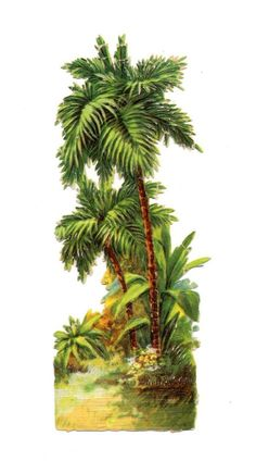Alte Oblate Glanzbilder Scraps Palmen 16,5cm ...