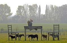 Little Horses and a Giant Table, central Germany