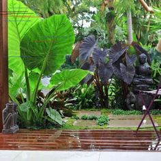 Tropical Garden Design, Pictures, Remodel, Decor and Ideas To be able to have a great Modern Garden Decoration, it is … Tropical Garden Design, Tropical Landscaping, Tropical Plants, Garden Landscaping, Tropical Gardens, Landscaping Ideas, Patio Ideas, Garden Paths, Garden Art