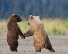 16 Pictures Of Animals Holding Hands