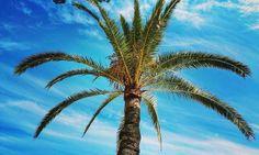 Just on the #beach - vorhin am #Strand , #beachlife #palm #palmbeach #summer #holiday #Spain #sand #sky #sunny