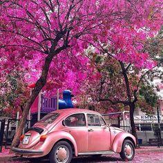 Martha Graeff ✔️ @marthagraeff Very color coordi...Instagram photo | Websta (Webstagram)