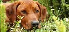 AWESOME tips for a dog friendly garden: plant ryegrass, fescue or clover where you want your pet to pee, pick dog friendly flowers, create a digging area, a path for your dog to run around, a pond with drinkable water...