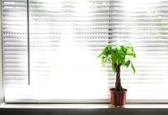 Google Image Result for http://9.mshcdn.com/wp-content/gallery/home-office/plants.jpg