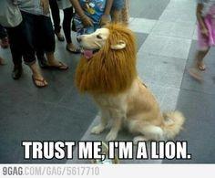 Trust me i am a lion