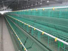 A type layer chicken cages,chicken cage,layer cages for poultry farm Chicken Coop Kit, Portable Chicken Coop, Chicken Cages, Chicken Coop Designs, Building A Chicken Coop, Chicken Runs, Poultry Cage, Poultry Farming, Pigeon Cage