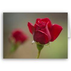 Red Rose Greeting Card $3.35