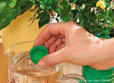 12 ОТЛИЧНЫХ СПОСОБОВ УДОБРИТЬ ДОМАШНИЕ РАСТЕНИЯ 1. Подкормка сахаром 1 чайную ложку сахара равномерно насыпают на поверхность земли перед поливом. Или разводят 2 чайные ложки сахара на стакан вод…