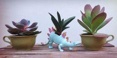 Tarde de dinosaurios y tazas! #cactusysuculentas #cactus #cacti #cactuslover #cactilove #suculentas #succulents #succulove #market #malasaña #dosdemayo #dosde #plazadosdemayo #madrid #echeveria #gasteria #kalanchoe