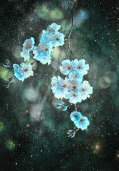 Turquoise Spring Questions Photograph