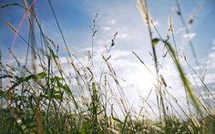 News Urlaub Steiermark - News Thermenland Steiermark Plants, Vacations, Flora, Plant