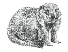 marmot pen illustration