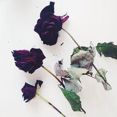 Anastasia Matveeva Beckman (@anastasiabeckman) • Foton och filmklipp på Instagram