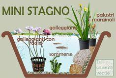 mini pond, mini stagno, piante acquatiche, laghetto