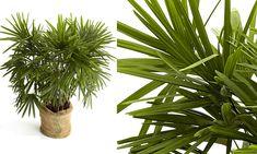 20 plantas para ambientes fechados - Casa - MdeMulher - Ed. Abril