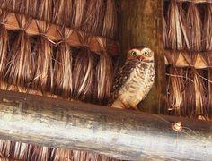 a cute owl.