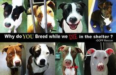 Why do you breed while we die in the shelter? Adopt, don't shop. Any breed!